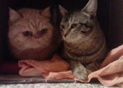 caja gatos